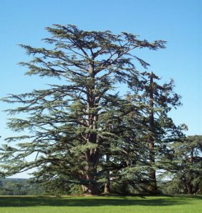 er_blog-tree-2551